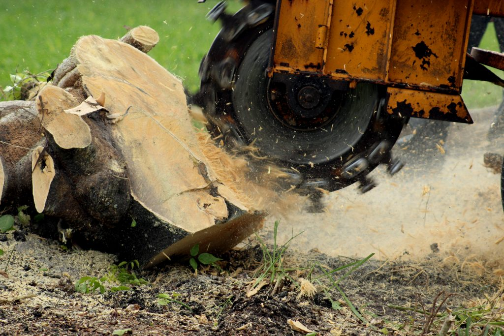 stump grinding removal